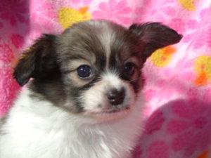 愛らしい小型犬